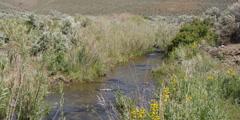 High desert stream flowing between brushy banks Stock Footage