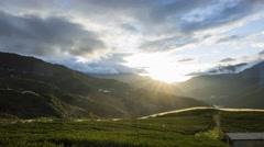 4K timelapse of Tea garden, sunset Stock Footage