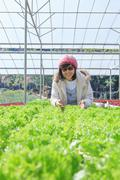 Healthy care woman in hydroponic vegetable green house plantation Stock Photos