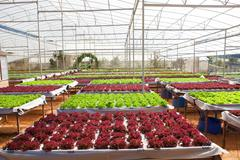 Green house plant of Organic hydroponic vegetable cultivation farm Stock Photos