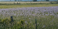 Wildflowers in foreground, pastures divided by fences in background Stock Footage