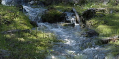 Swift small stream flowing over mossy rocks Stock Footage