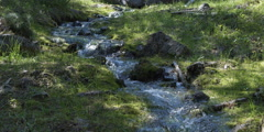 Close view of small mountain stream flowing over rocks between grassy banks Stock Footage