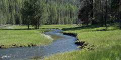 Mountain creek running through forested meadow Stock Footage