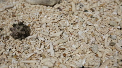 Small hermit crab in the sand. Stock Footage