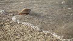 Seashell  on the sand beach - stock footage