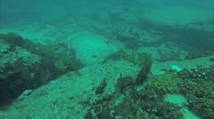 Sea turtle in Cabo pulmo Stock Footage