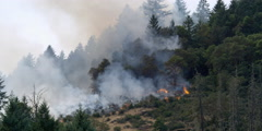 Stock Video Footage of Smoke rising from small blaze at edge of timbered slope