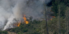 Smoke rising above flames of spreading brush fire igniting trees - stock footage