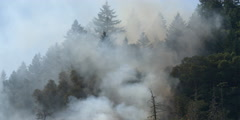 Smoke obscuring tall conifers as flames burn in underbrush at lower right - stock footage