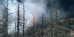 Smoke rising over flames advancing toward dead trees in foreground - stock footage