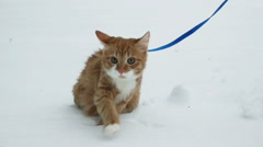 Cat walking on snow, slow motion Stock Footage