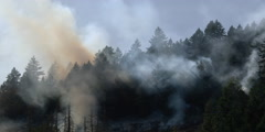 Heavy smoke veiling a forest at edge of charred ground - stock footage