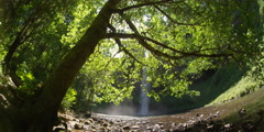 Wide view of South Falls with maple tree in foreground at Silver Falls State Stock Footage