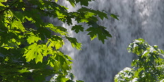 Cascading water framed by leafy branches - stock footage