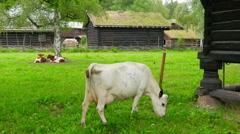Stock Video Footage of animal husbandry livestock breeding, norwagian village, green grass rooftop,