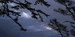 Silhouetted tree branches with Pacific waves behind Stock Footage
