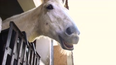 Horse in the stall funny lip-synching Stock Footage