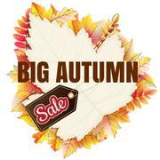 Fallen leaf Big Sale. EPS 10 - stock illustration