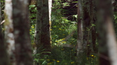 Yellow flowers and green foliage between alder trunks in a sun-dappled forest Stock Footage