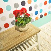 Red geraniums decorating a room - stock photo
