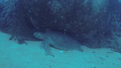 Sea turtle in Cabo pulmo Stock Footage