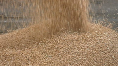 Agriculture, pouring crop at wheat harvest Stock Footage
