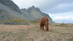 Brown horse closeup - stock footage