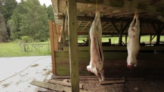 Two lamb carcasses hanging after slaughter Stock Footage