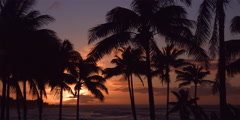 Palm trees silhouetted against a glowing Hawaiian sunset Stock Footage