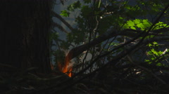 Close view of flames in forest foliage Stock Footage
