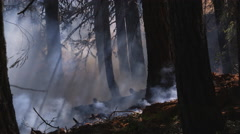 Heavy smoke blows through trees as flames burn along forest floor - stock footage