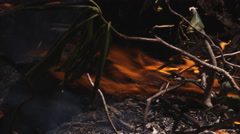 Close-up of flames burning debris on forest floor - stock footage