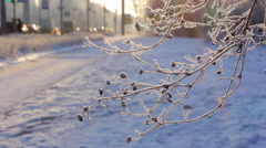 Hoarfrost on branches of bushes. - stock footage