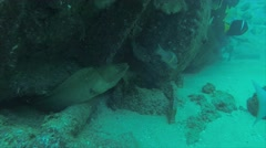 Moray eel Stock Footage