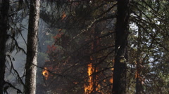 Tree branches going up quickly in flames Stock Footage