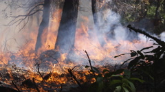 Forest floor blazing, hot shot forest fighter seen through smoke - stock footage