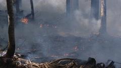Wood debris on forest floor burns - stock footage