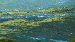 Surging current in a stream with green reflections Stock Footage