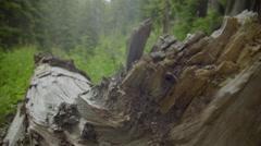 Artistic shot of fallen tree Stock Footage