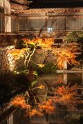 Japanese maple leaf tree and pond in autumn Kuvituskuvat