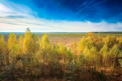 Blue sky over bog grassy. Dwarf trees growing near the marsh bog - stock photo