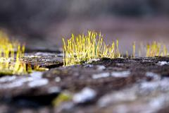 Detail of an old stone wall with green moss - stock photo