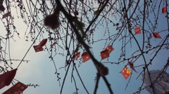 Chines Red Envelope on the tree - stock footage