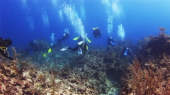 Group of divers swimming along the reef in Bahamas Stock Footage