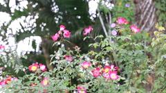 Footage of flower in garden Stock Footage