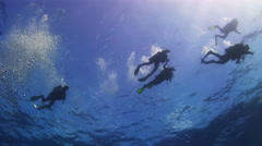The group of divers on the sea surface. Stock Footage