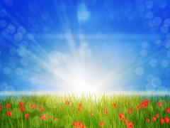 Sunny poppy field - stock illustration