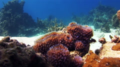 Sea sponges in the midst of a coral reef. Stock Footage