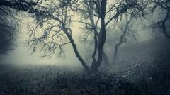 Mystical autumn forest with green fog in the morning - stock photo